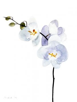 Ivana Zivic, Orchid, Watercolour, 25x19cm, £180