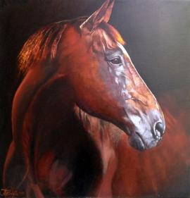 Natasa Kodela, Horse Portrait, Oil on Canvas, 40x40cm